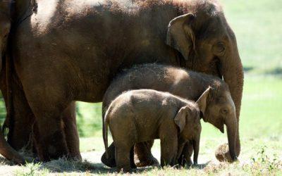 Developing Machine Learning Algorithms to Identify Elephant Communication
