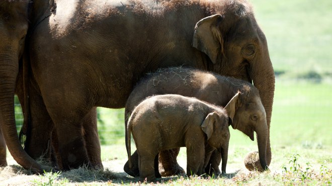 Developing Machine Learning Algorithms to Identify Elephant Communication